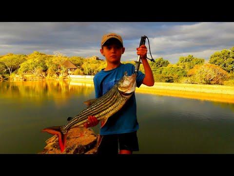 Intense Tigerfishing (monster Caught!)