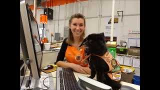 Atlas The Pomeranian: Home Depot Mascot