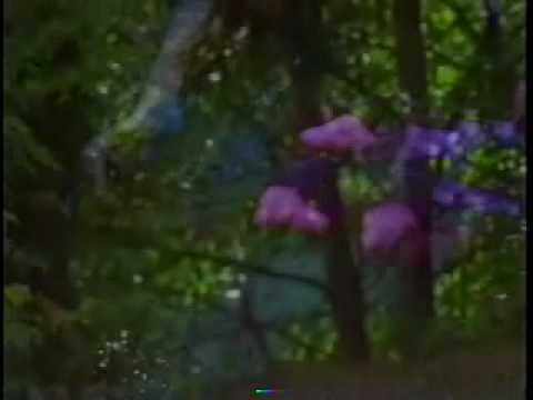 "Mushroom Trail ""Pine Valley"" Music Video"