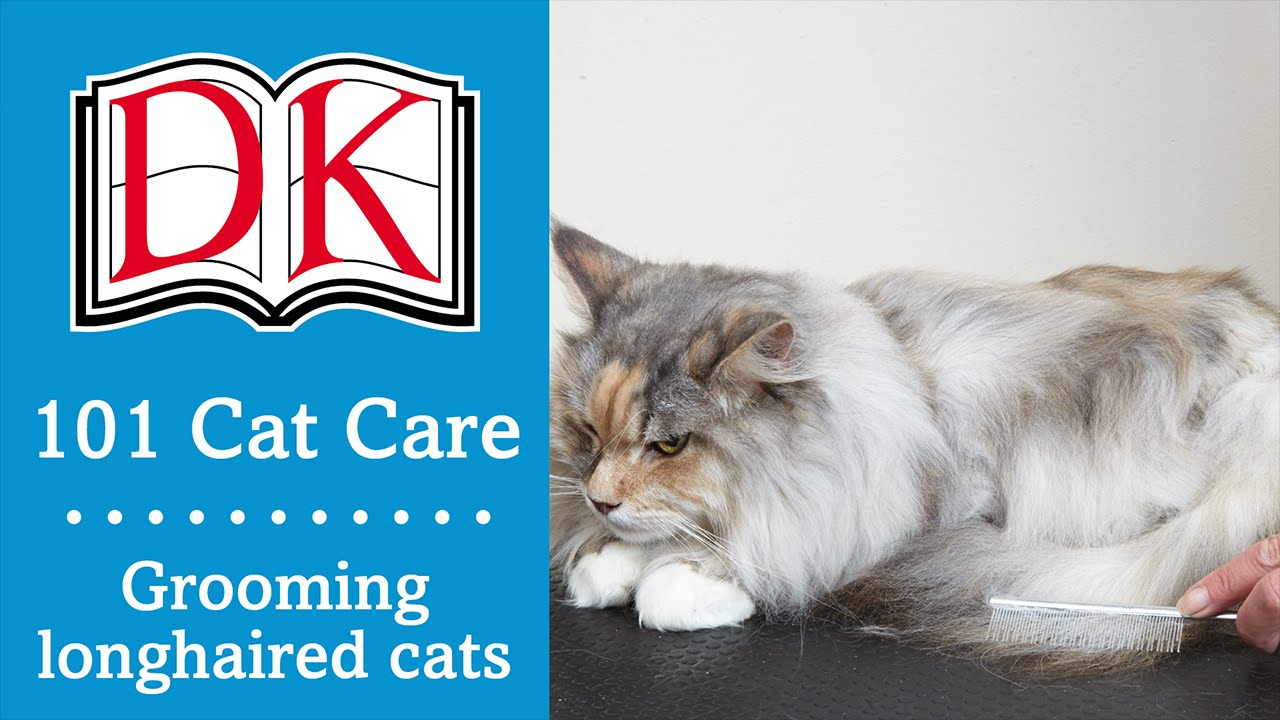 101 cat care cat grooming for longhaired cats   youtube