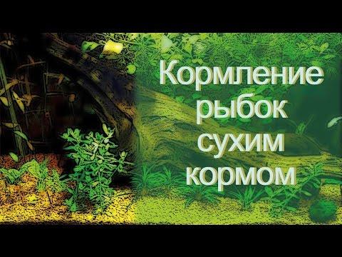 Сухой корм для рыб. Кормим аквариумных рыбок