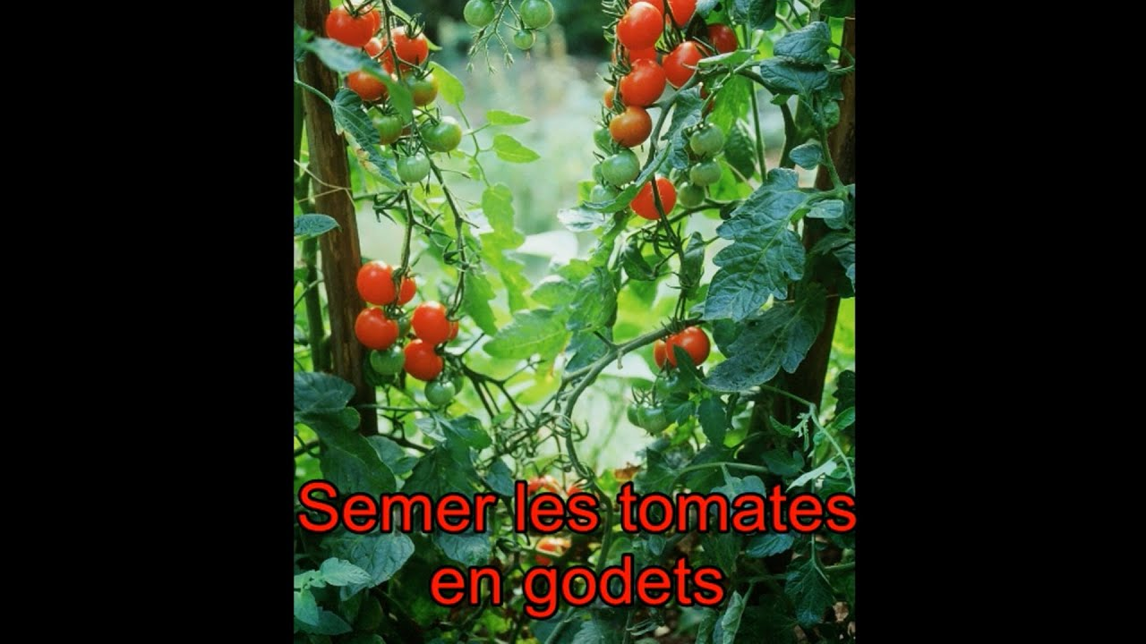 les 4 saisons du jardin bio semer les tomates en godets youtube. Black Bedroom Furniture Sets. Home Design Ideas