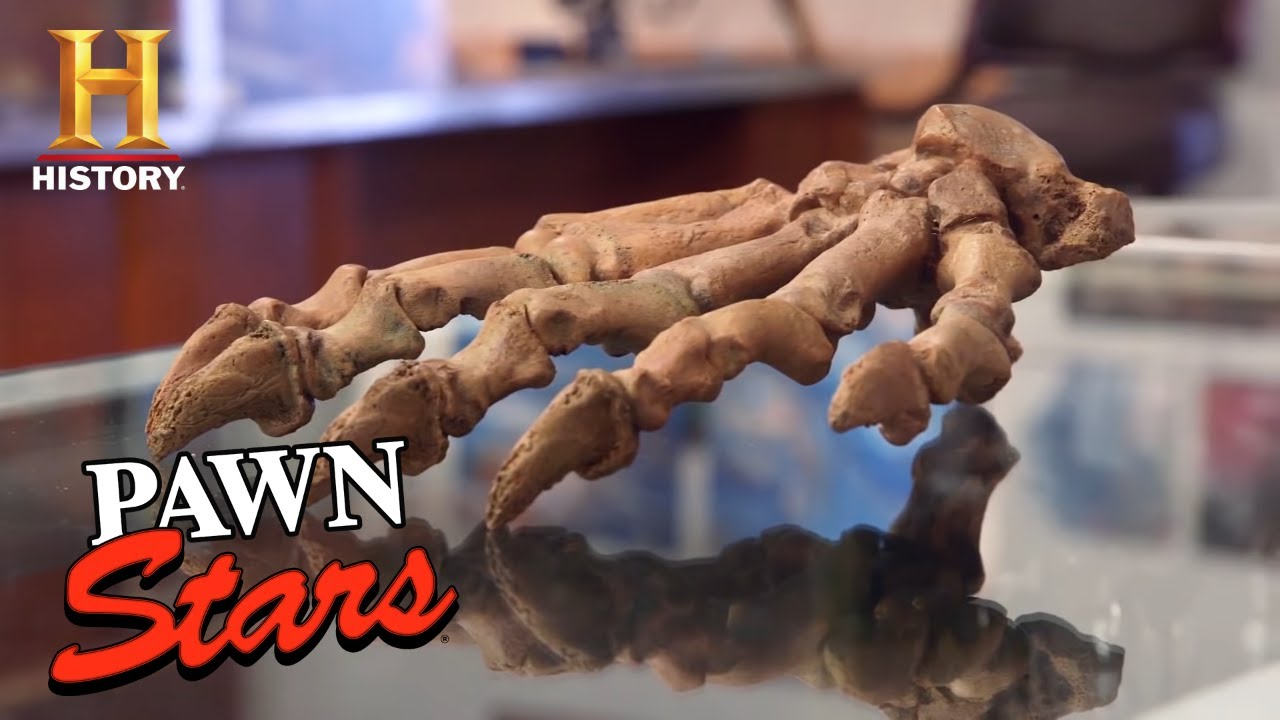 Pawn Stars: TOP PREHISTORIC PAWNS (3 Old, Rare & Expensive Items) | History
