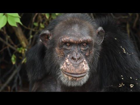 Rooney and Kate Mara Visit Abandoned Chimpanzees in Liberia