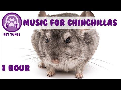 1 Hour of Relaxing Music for Cheeky Chinchillas! Chinchilla Music. Pet Music.