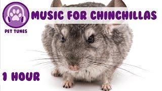 Baixar 1 Hour of Relaxing Music for Cheeky Chinchillas! Chinchilla Music. Pet Music.