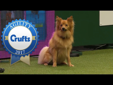 Agility - Crufts Large Novice and Medium ABC Jumping Final (Part 2) | Crufts 2017