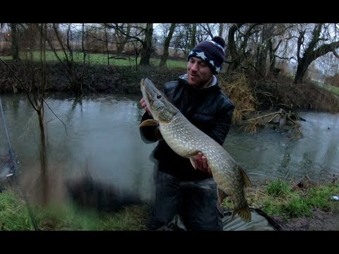 Floodwater River Pike!