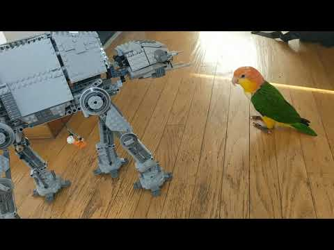 Lego At-At vs. white bellied caique