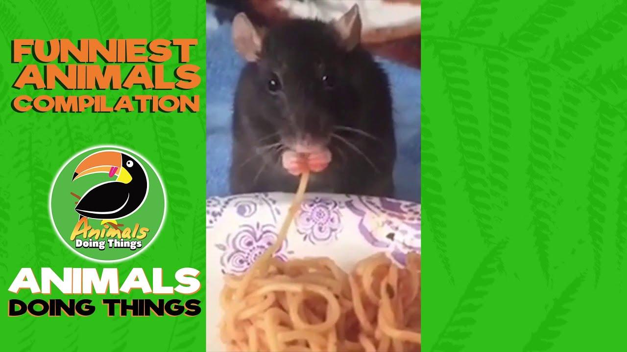 Strange Pets Volume 1 Animal Compilation