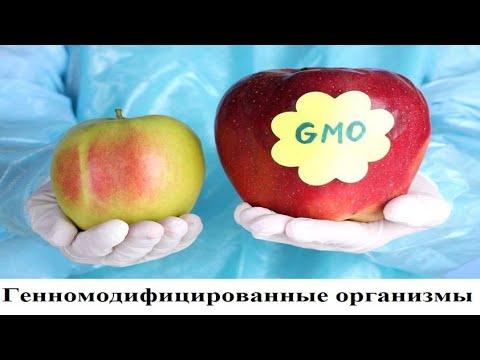 Генномодифицированные организмы (ГМО). Их распространение сулит гибель всего живого на нашей планете