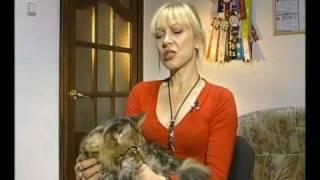 Самые большие коты с мире  МЕЙН КУНЫ (Maine Coon cats)