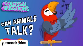 Can Animals Talk To Each Other? | COLOSSAL QUESTIONS