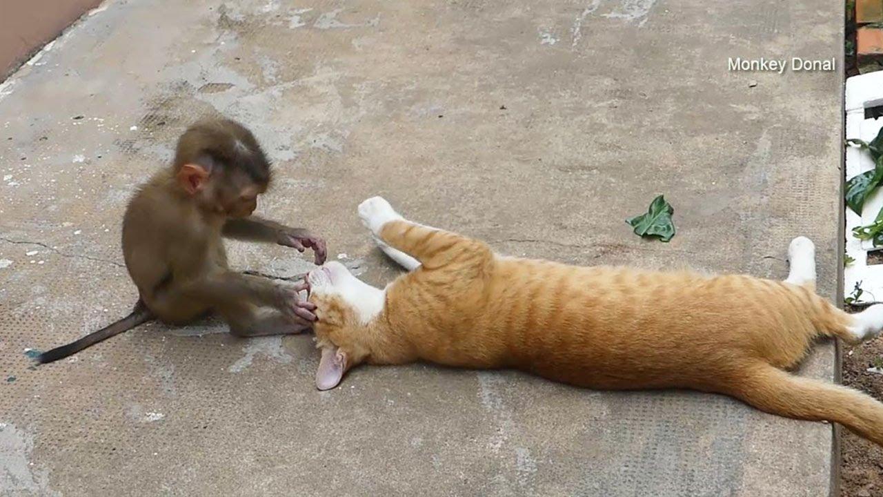 Donal Wonder And Check Kitty Cat Teeth