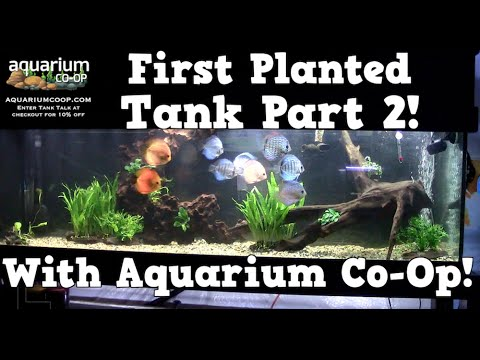 Planting Your First Planted Tank PART 2 With Aquarium Co-Op and KGTropicals!!