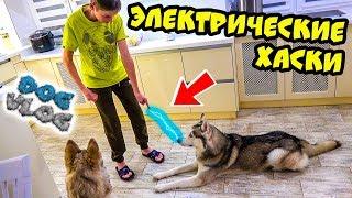 БЛИСКАВКА - ДІМА БІЛАН. КАВЕР ПАРОДІЯ (Хаскі Бандит) Говорить собака