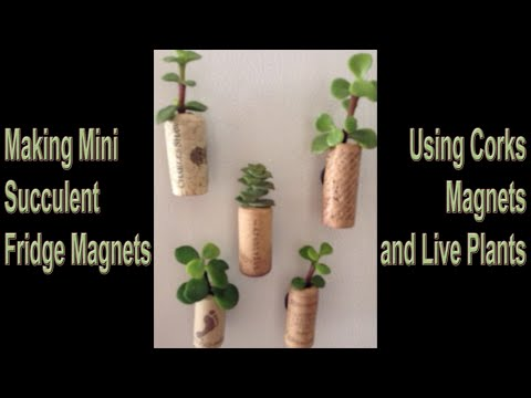 Mini Cork Succulents Fridge Magnet Tutorial DIY