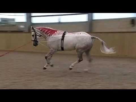 Anatomie verstehen - besser reiten | Gillian Higgins - YouTube