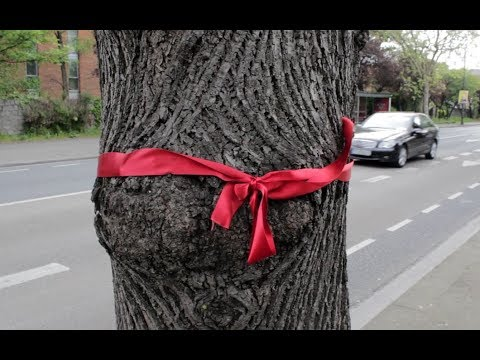 South Dublin locals have been tying ribbons to trees in protest at the BusConnects plan