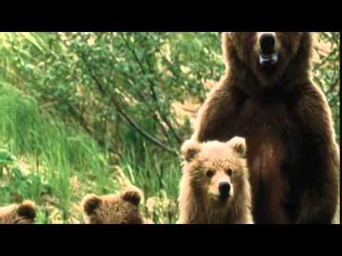 Pluszowe Niedźwiadki