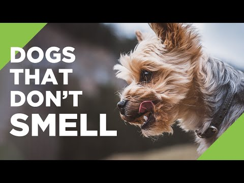 10 Dogs That Don't Smell