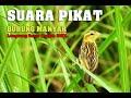 Gambar cover Suara Pancingan Burung Manyar Agar Gacor