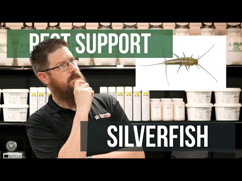 How Do I Protect Books And Paper From Silverfish? | Pest Support