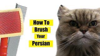 How To Brush Persian Cat
