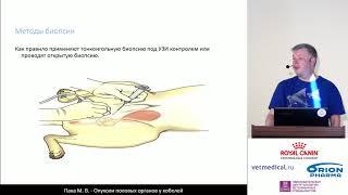 Пака М. В. - Опухоли половых органов у кобелей