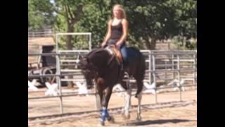 Leah Grisham College Equestrian Video
