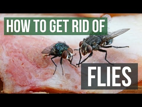 How To Get Rid Of Flies: Fly Control Methods