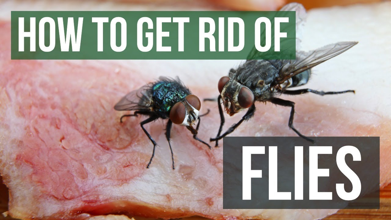 The best diy fly killer fly control products solutions pest lawn