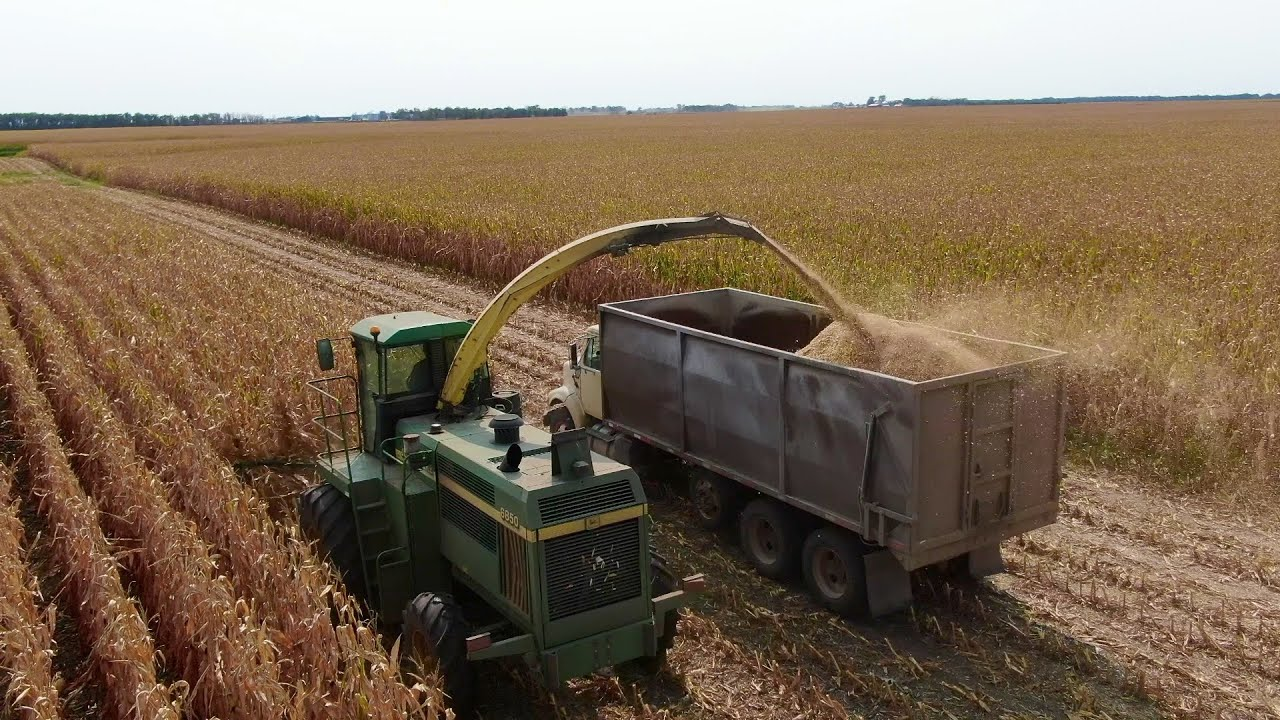 Chopping our corn and sorghum silage