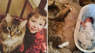 You Will Never Believe How This Maine Coon Cat Behaved When His Owners Had A New Baby!