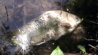 Волгоград: пенсионеры спасают рыбу.