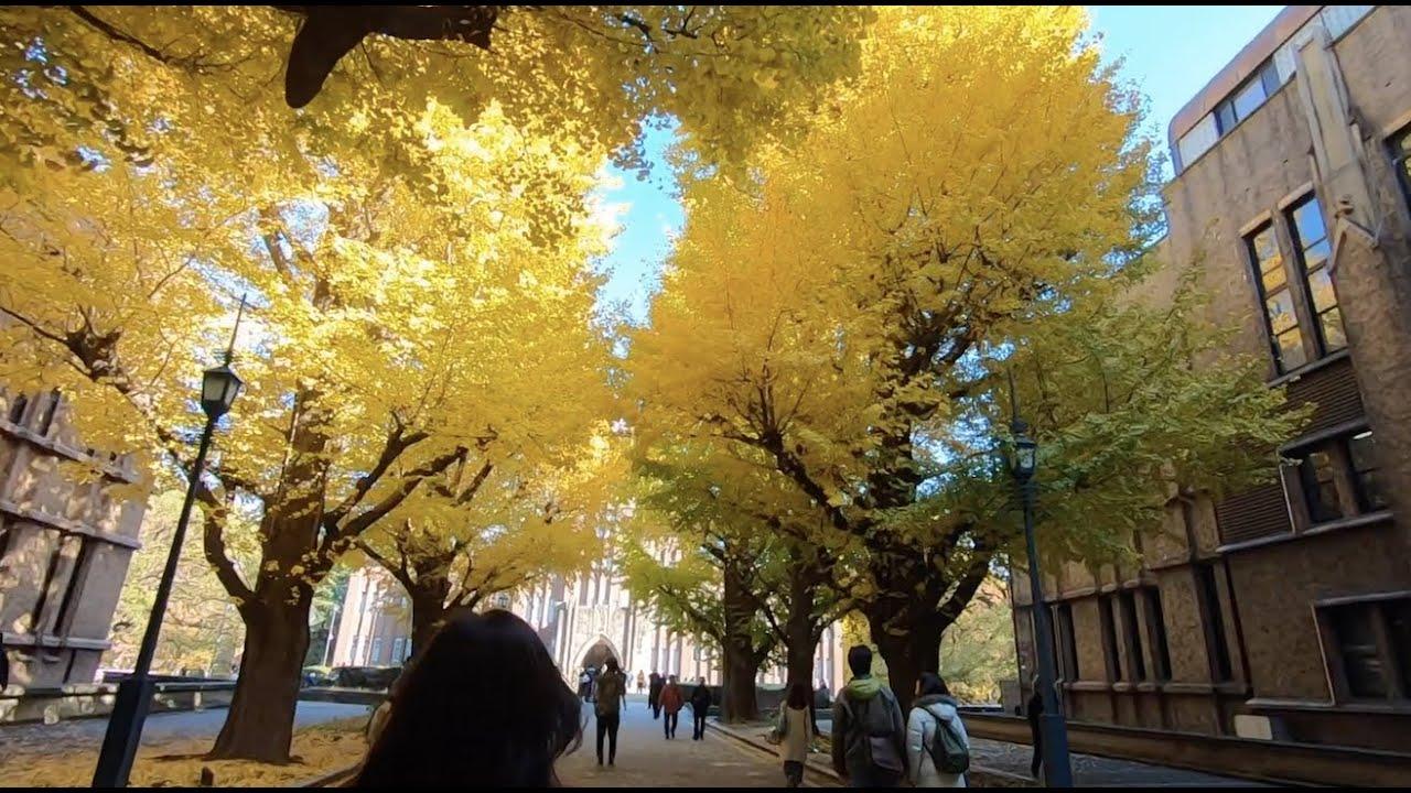 [Po Ichigo] Đại học Tokyo đẹp như một giấc mơ ||| The University of Tokyo ||| 東大本郷キャンパス (teaser)