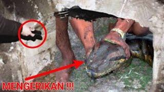 """Mengerikan,!! Menggali makam kuno malah temukan ular sebesar ini yg dipercaya ada """"hal ganjil"""""""