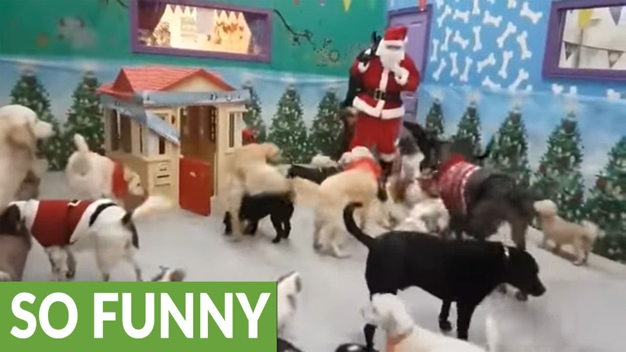 santa paws delivers gifts to good doggies youtube