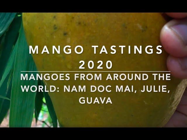 Mango Tastings 2020: Mango varieties from around the world - Nam Doc Mai, Julie, Guava