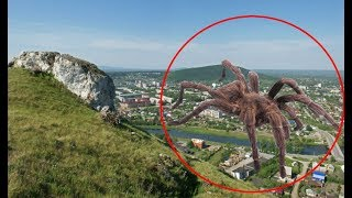 5 GIANT SPIDER CAUGHT ON CAMERA & SPOTTED IN REAL LIFE! 5