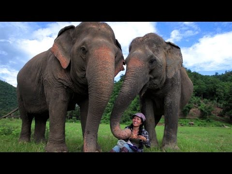 Protection of Elephants in Thailand - Intrepid Travel