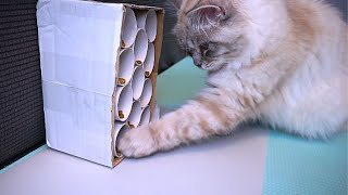 Cheap DIY Puzzle Feeder for Cats