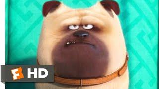 The Secret Life of Pets - Home Alone Scene   Fandango Family