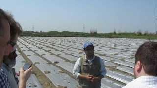 Farmer Ramesh Growing Musk Melon