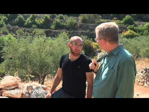Battir, Palestine: Olive Harvest