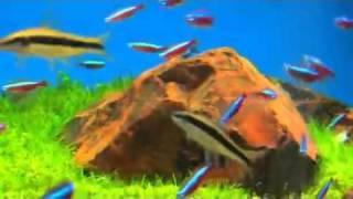 видео Астраханские ведомости