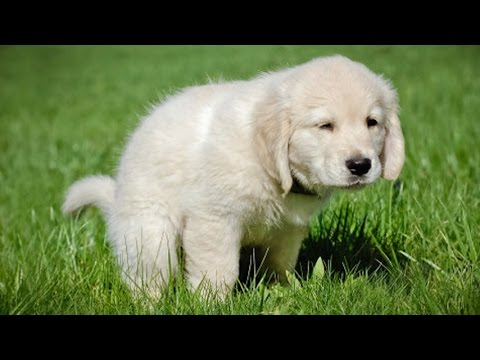 how-to-potty-train-a-puppy-in-7-easy-steps