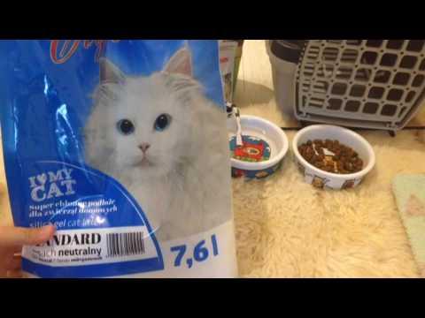 Вопрос: Как подготовить дом к появлению кошки?
