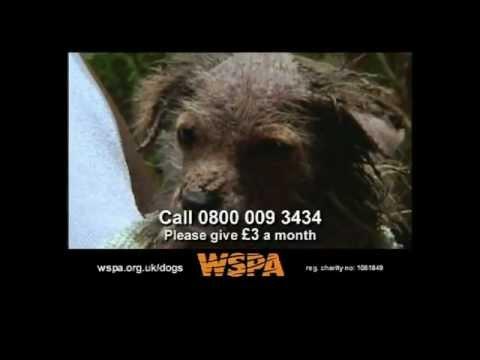 WSPA - Dogs TV Advert