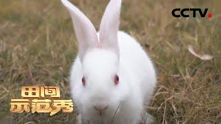 《田间示范秀》 20200613 虾苗仔兔保卫战|CCTV农业